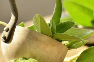 лечебные травы от диареи