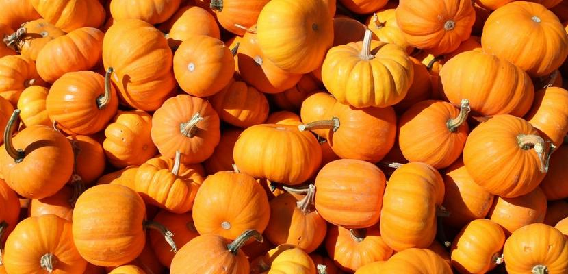 Понос после съеденной тыквы — почему пищевод так реагирует на плод?