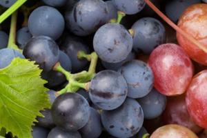 диарея от винограда у ребенка